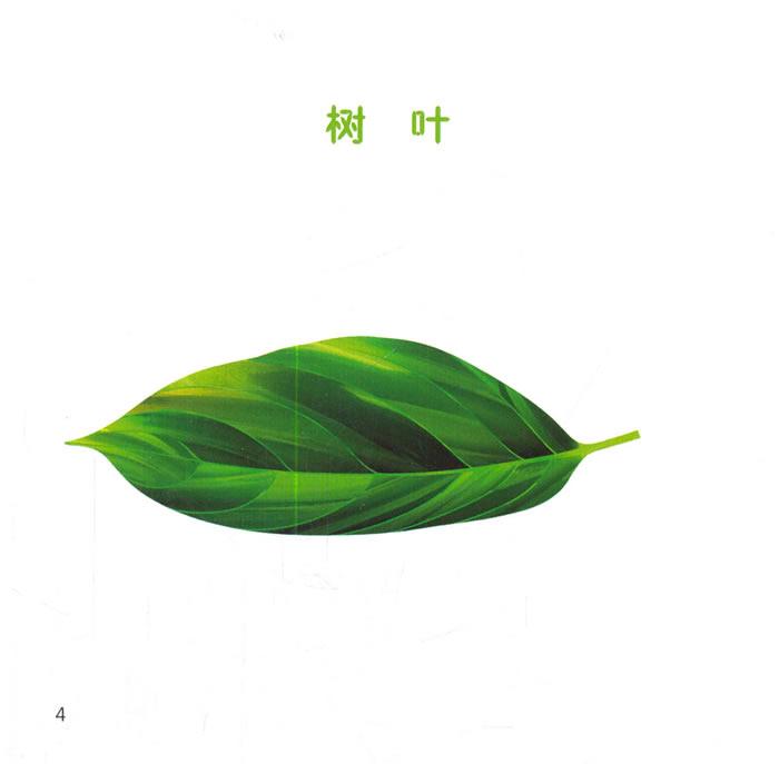 幼儿园区角绘本书 大班4 用树叶