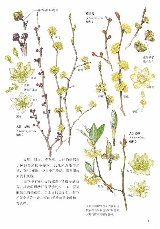 林中漫步 231种植物的手绘自然笔记 长谷川哲雄 9787115378910 人民