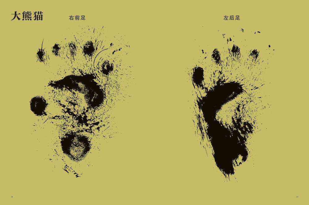 一本全方位解读动物脚印的趣味科普图鉴。以独特视角脚印为切入点,通过14种 形态各异的动物脚印,了解14种动物的生活。 动物的脸千差万别,动物的脚更是形状各异。 动物的脚有很多用途:走路、奔跑、捕猎、挖土、爬树在动物的生活中,脚具有哪些作用呢?而说到动物的脚趾,多则五个,少则一个。为什么有些动物需要五个脚趾,而有些动物只需要一个脚趾呢?我们可以从动物的脚的形状上,了解这种动物的生活区域和生活状况。人们很容易忽略动物的脚,但恰恰是动物的脚,才真正称得上是动物的另一张脸。 《动物的脚印》是一本全方