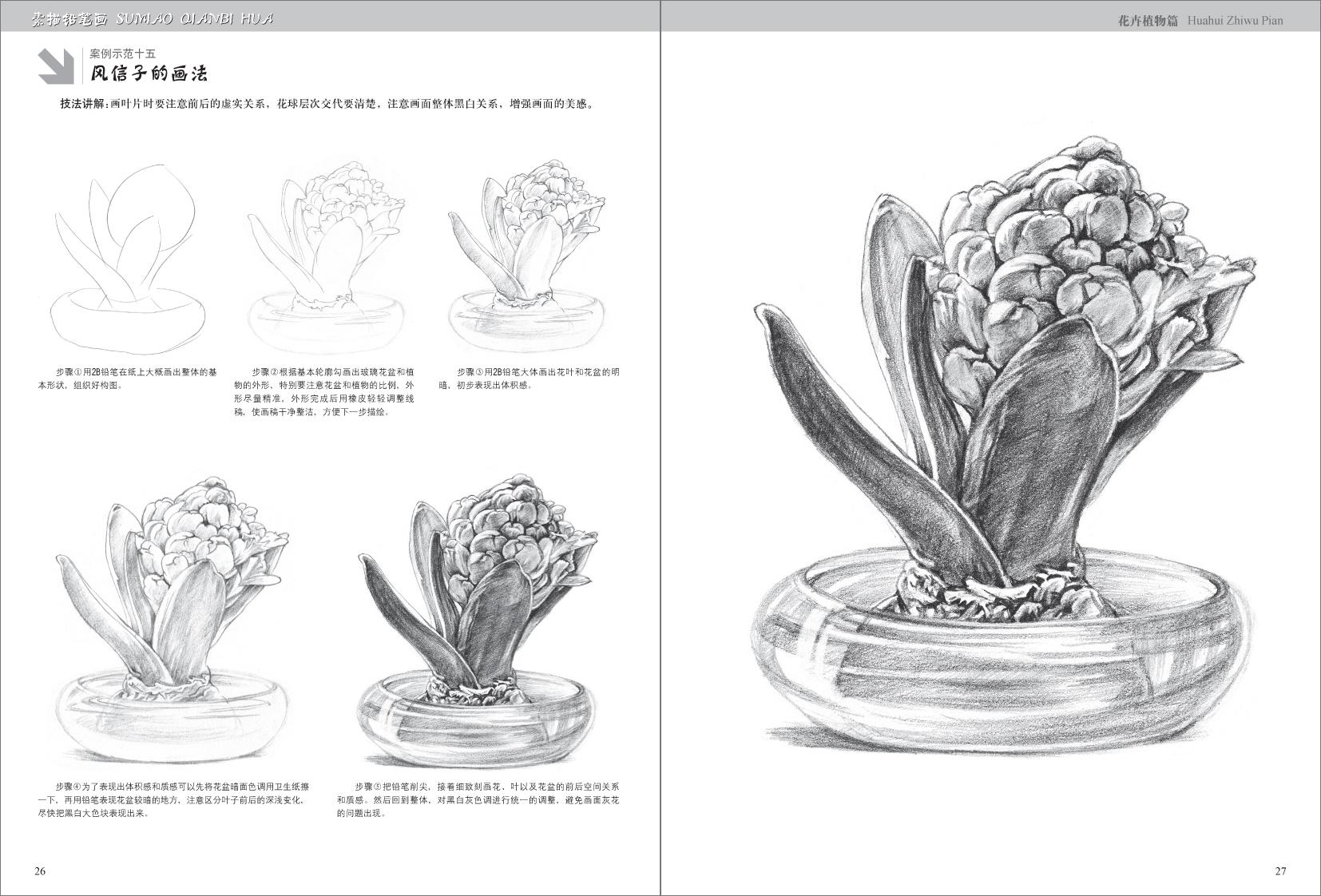 素描铅笔画· 花卉植物篇/刘丽霞